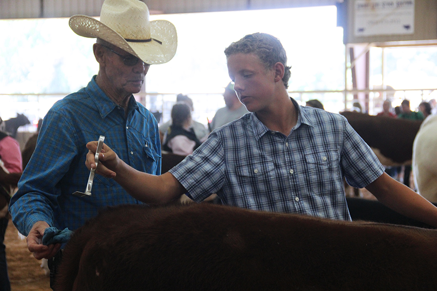 Tyler Thompson brushes his animal before showing. This was his first show of his high school experience.