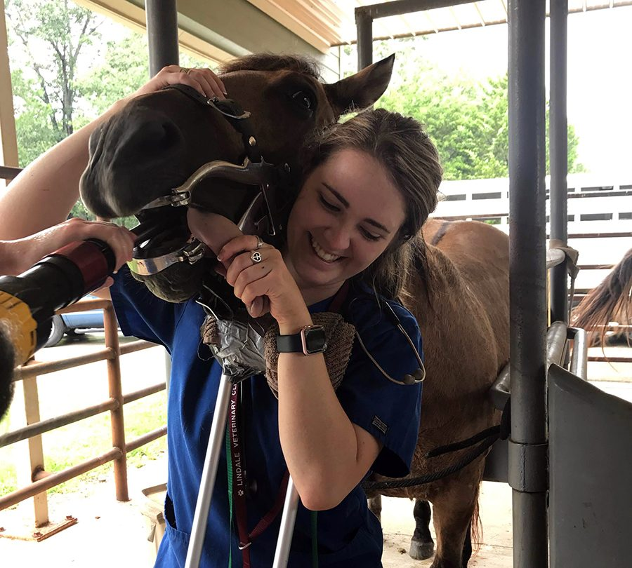 Morrow helps in a dental procedure on a horse. She worked with many different species.
