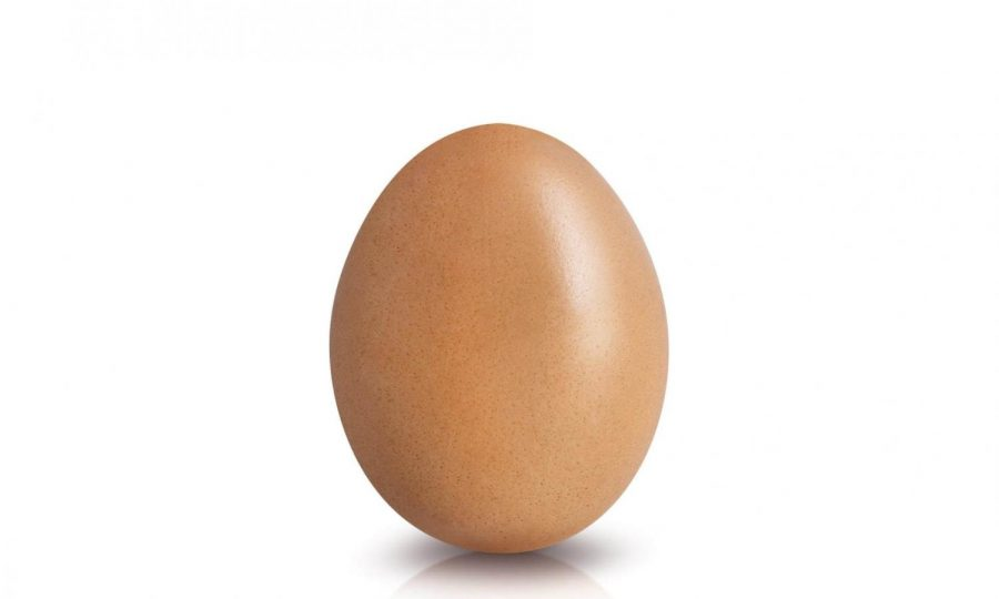 An egg sits in a white room. I love that I can sit in a white room, the egg said.