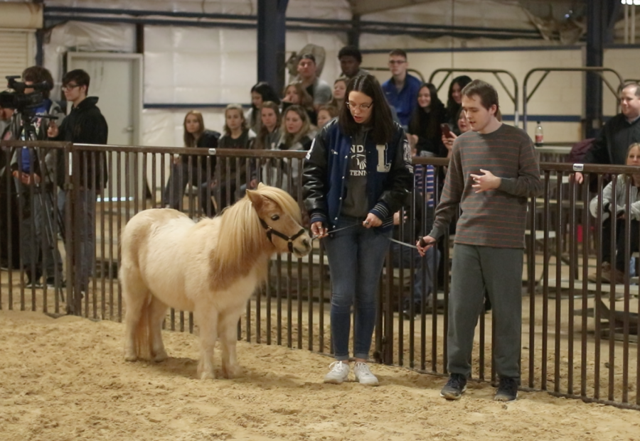 Madison Ortiz and Ben Zimmerman lead Bonnie, the miniature horse. The CBI class attends the annual miniature horse contest.