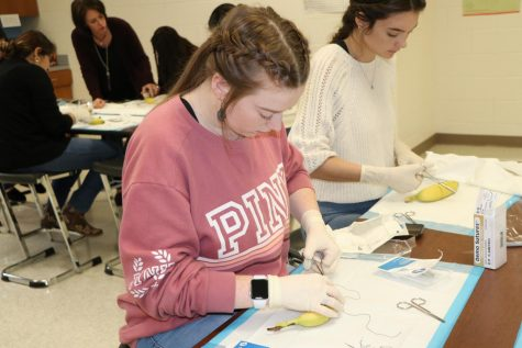 Students in Sally Clemmons' CMA classes prepare for their certification test by practicing sutures on fruit.  This photo was taken before the Covid-19 crisis closed down the schools.