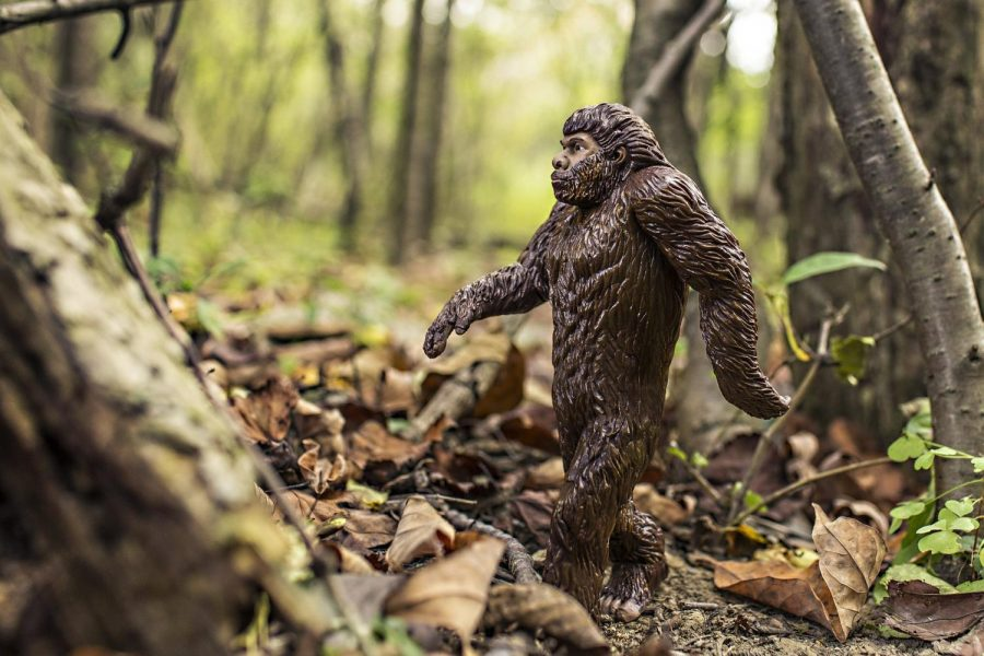 After the incident Bigfoot has become a running gag in the Phillips family. The BFRO continues to investigate the area where it happened.